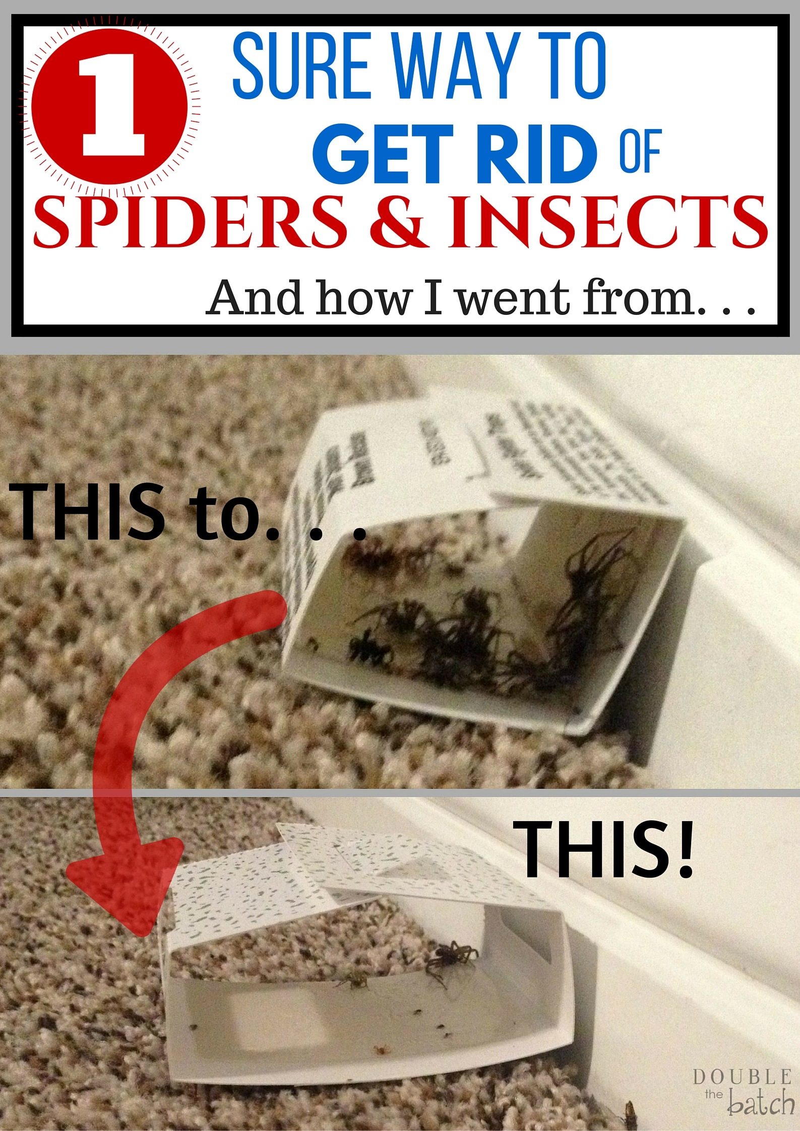 1 sure way to get rid of spiders and insects in your home for How to get rid of spiders in house