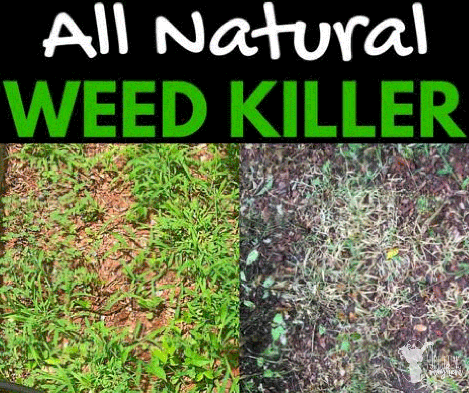 A weed killer that is all natural with common household items! Seriously works great! Check it out!