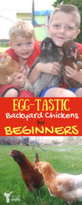 EGG-TASTIC Back yard chickens for Beginners