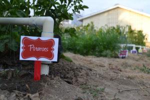 Potatoes, garden label