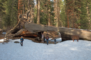 Sequoia National Park Ultimate Travel Guide: Everything you need to know about this amazing park. Routes, hikes, and lots of other tips to make your trip amazing!